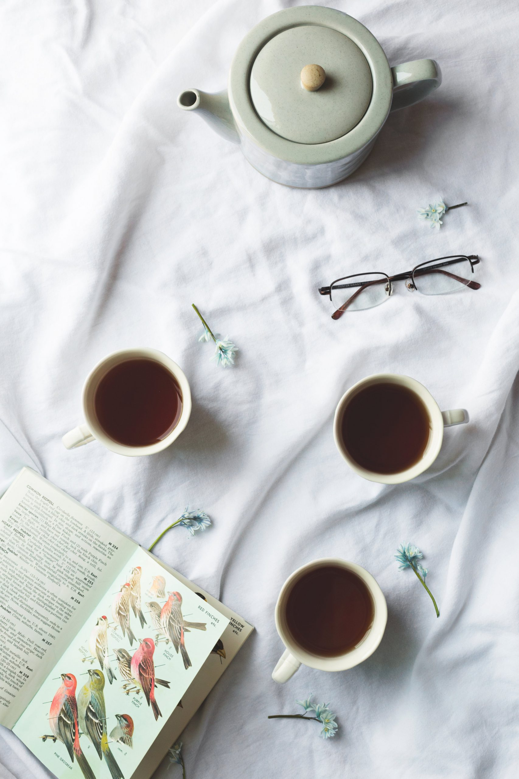 bird-book-and-tea-time