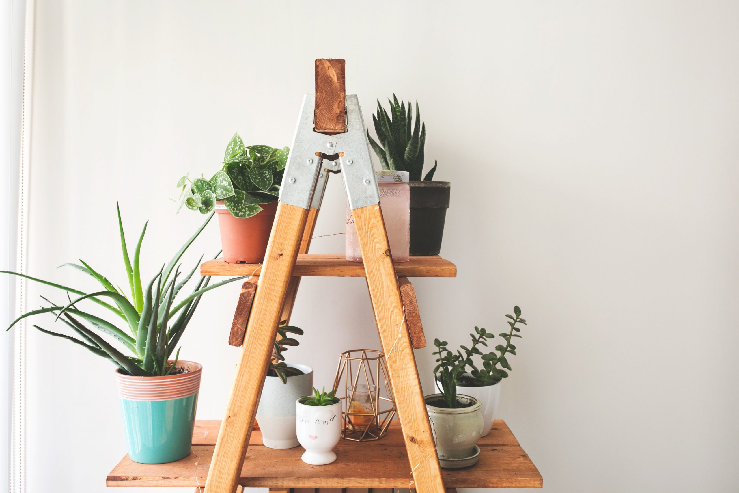 ladder-plant-shelf