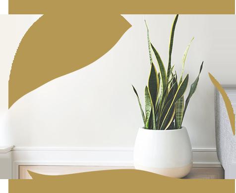 background-plant